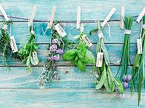 floricoltura nella Tuscia