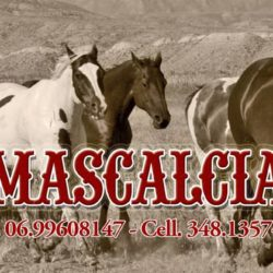 Mascalcia e Mustang Oriolo ROmano
